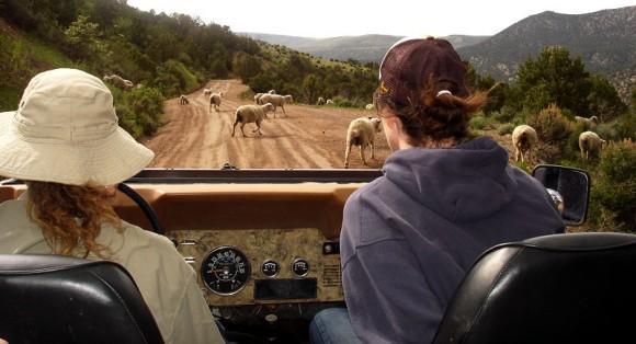 timberline_jeep_tours_2-580x314