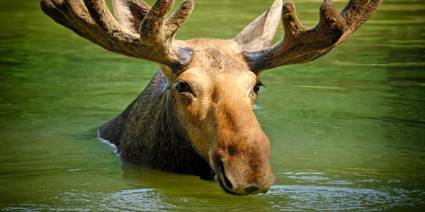 colorado wildlife sightings